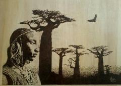 Boaboab Africa