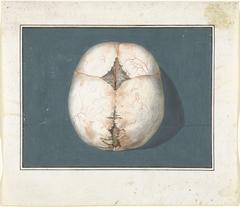 Bovenzijde van een ongedichte kinderschedel