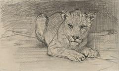 Liggende leeuwin