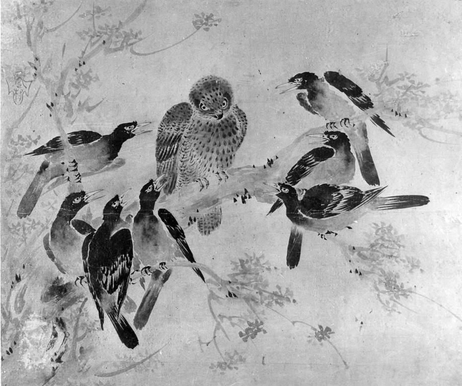 Mynah Birds Attacking an Owl