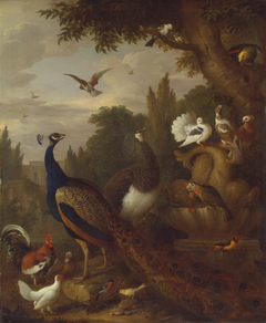 Peacock, peahen, parrots, canary, and other birds in a park