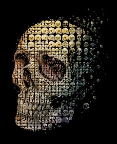 Skull Evolution