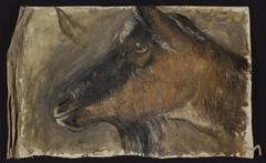 Study of a goat's head