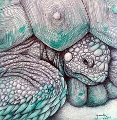 Tortoise I