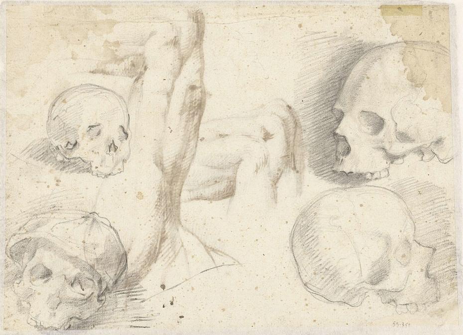 Vier studies van een schedel