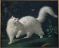 White Angora Cat Chasing a Butterfly