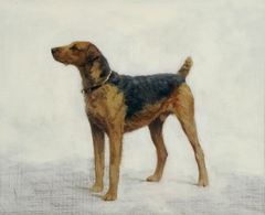 An Airedale Terrier