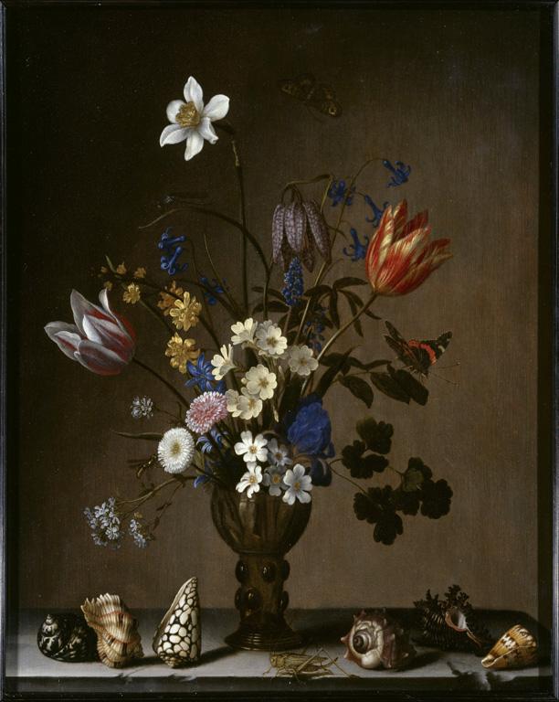 Flowers, Shells, Butterflies, and Grasshopper