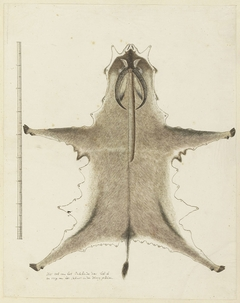 Huid van een bastergemsbok (Hippotragus equinus)