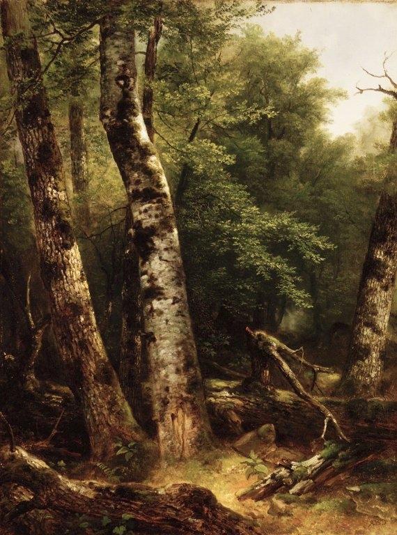 Landscape (Birch and Oaks)