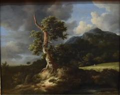 Landscape with Blasted Oak
