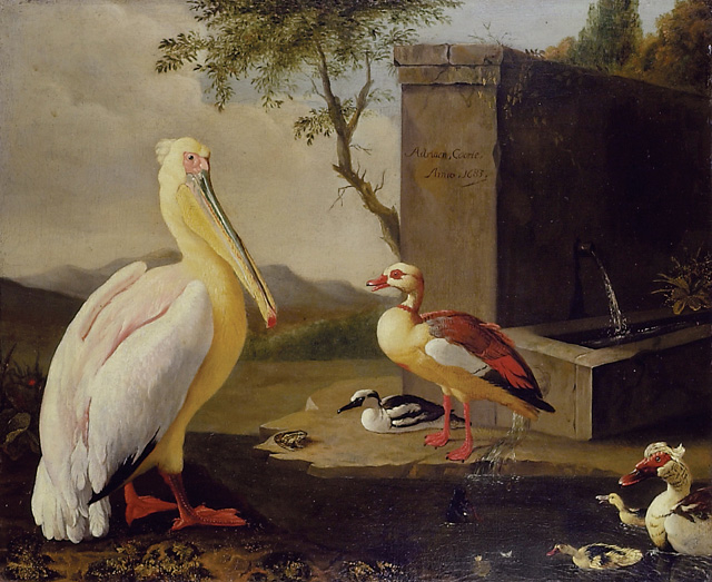 Pelican and ducks in a mountain landscape