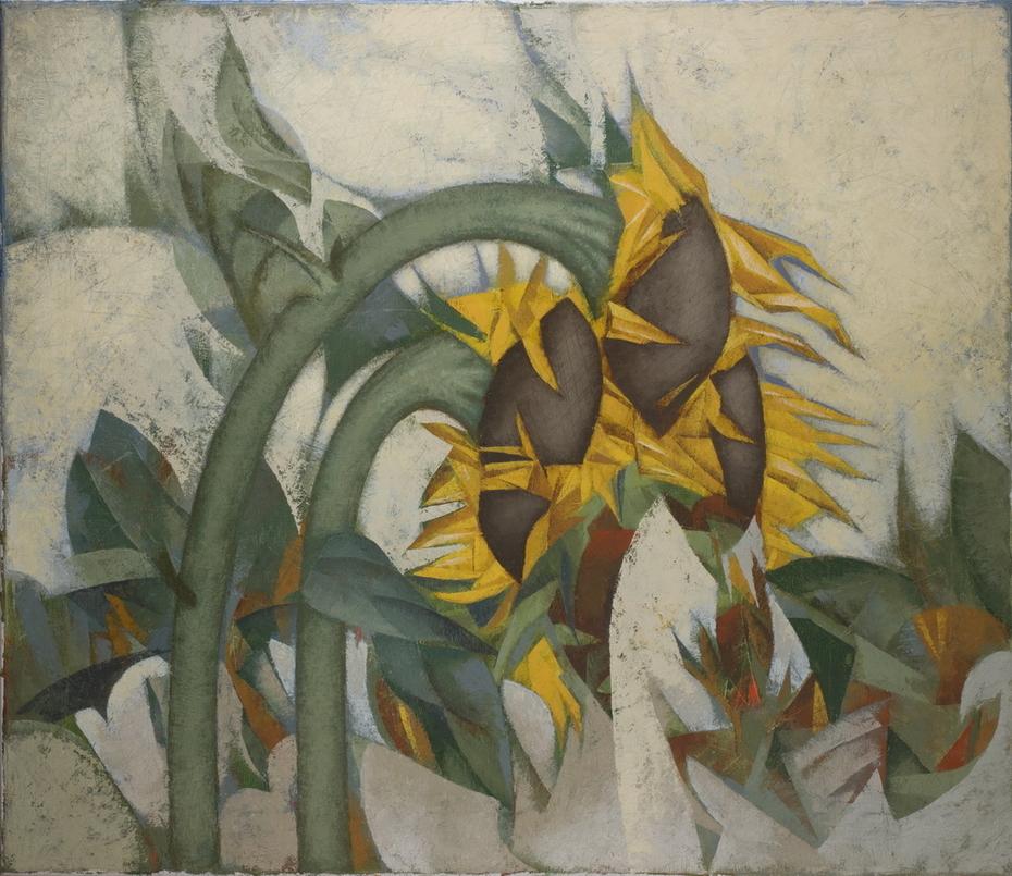 Подсолнухи / Sunflowers