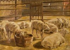 Sheep in a fold