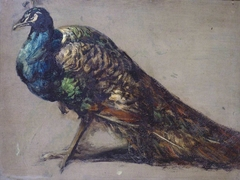 Study of a Peacock for 'The Judgement of Paris'