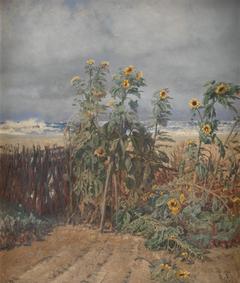 Sunflowers on a Beach