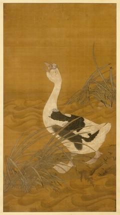 Swan Goose Among Water Reeds