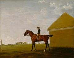 Turf, with Jockey up, at Newmarket