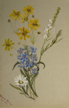 (Untitled, Group of Flowers)