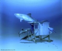 CABANE AUX REQUINS - Shark shack -
