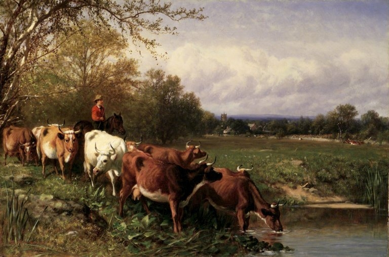 Cattle and Landscape