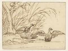 Drie eenden aan de waterkant