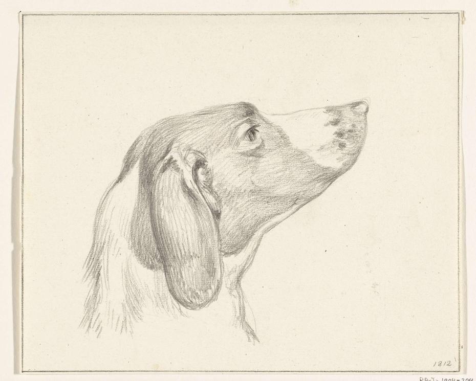 Kop van een hond, naar rechts