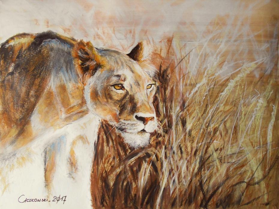 lion - african beauty