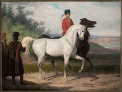 Purchase of an Arab horse