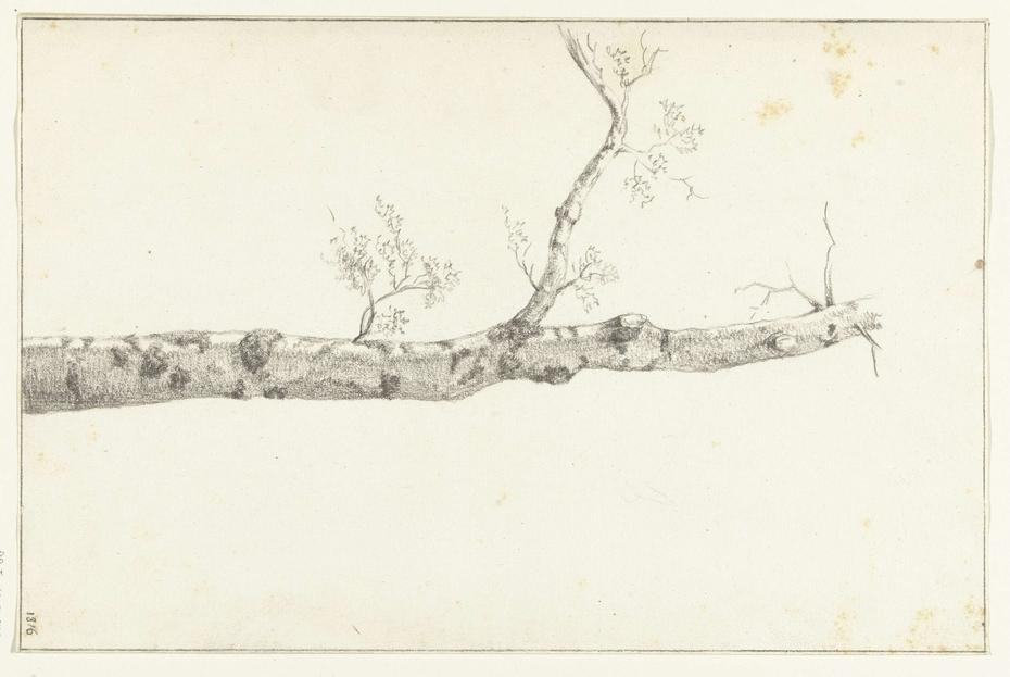 Studie van een boom