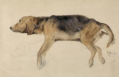 Study of a Dog Lying Down