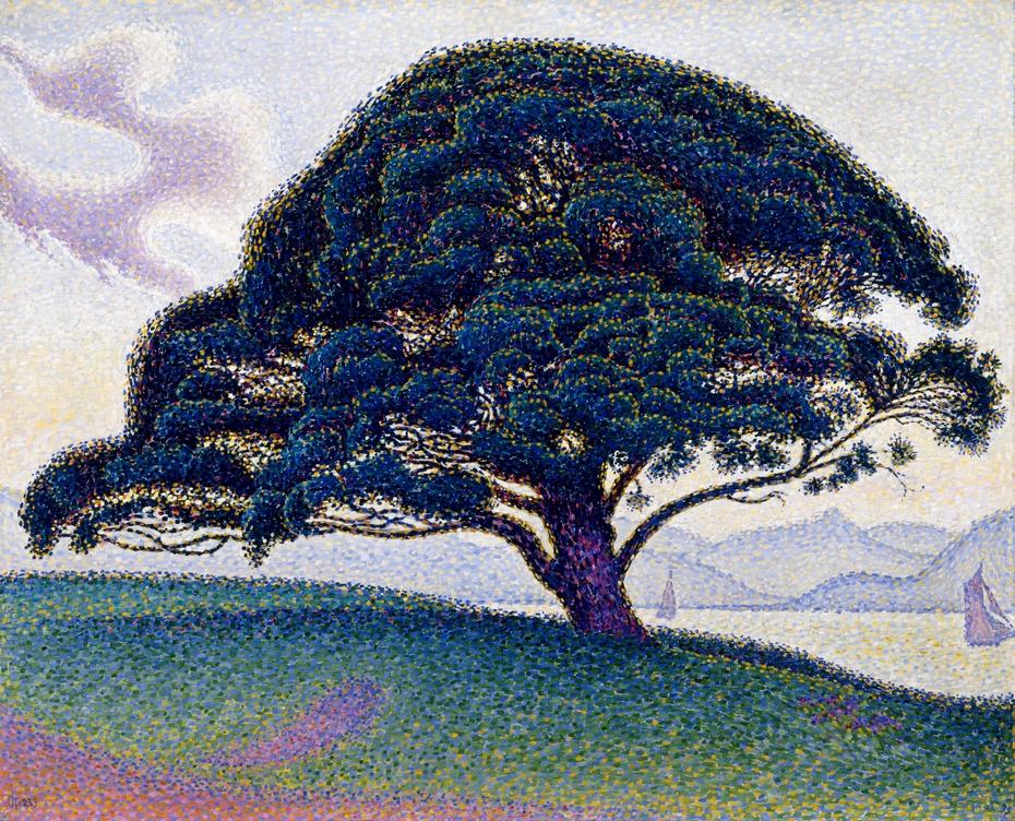 The Bonaventure Pine