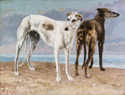 The Greyhounds of the Comte de Choiseul