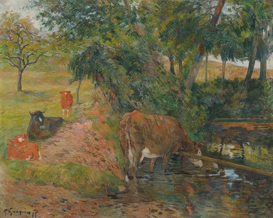 Vaches au repos