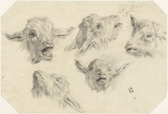 Vijf schetsen van geitenkoppen