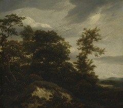 Wooded Dune Landscape