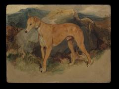 A Deerhound