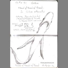 Carnet Bleu: Encyclopedia of…shark, vol.III p11 by Pascal