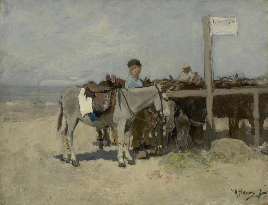 Donkey Stand on the Beach at Scheveningen