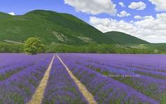 La Chaleur et Le Coeur de La Provence