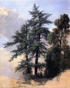 Nature Study, Trees, Newburgh, New York