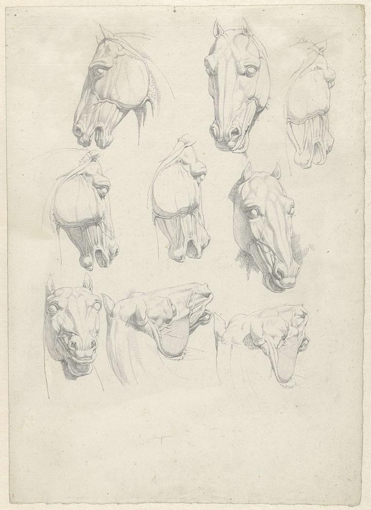 Negen anatomische studies van een paardenhoofd