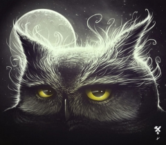 Owl & the moon