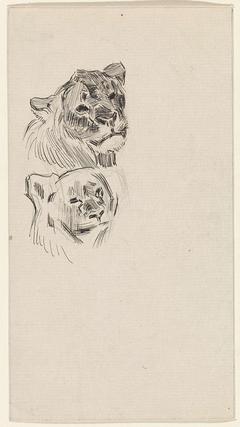 Twee koppen van leeuwen