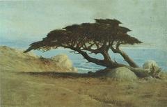 Witch Tree, Carmel