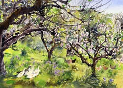A Cornish Orchard in Spring