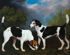 A Couple of Foxhounds