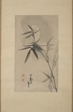 Bamboo under the Moonlight