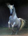 Beleza branca (1) / White beauty (1)