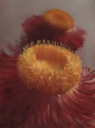 Helichrysium